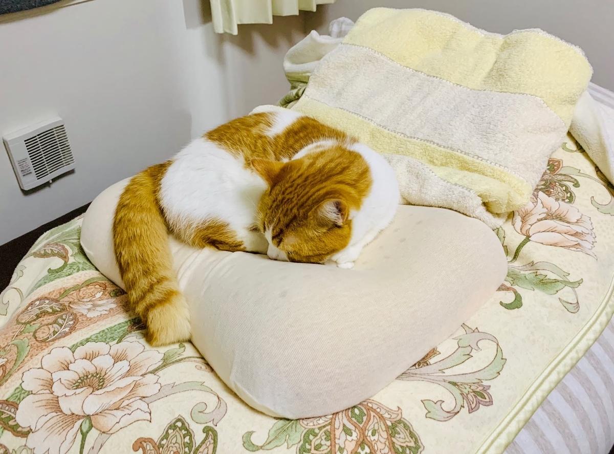 枕で寝るるるちゃん1