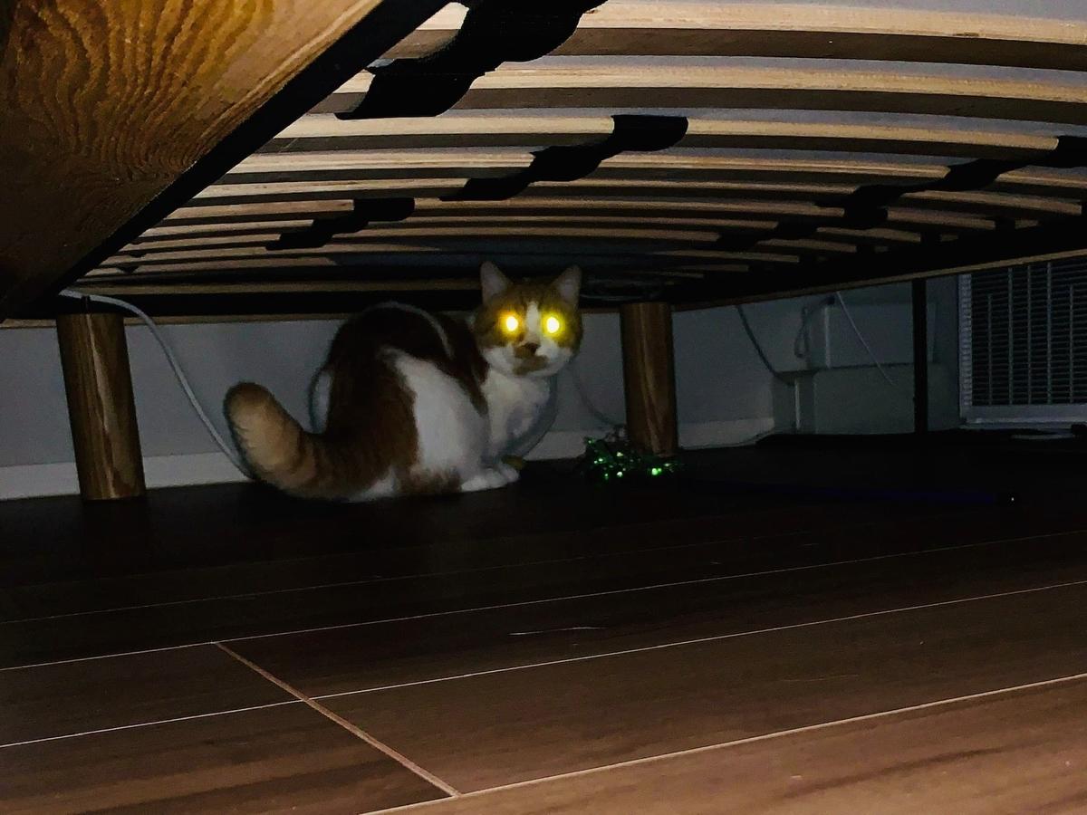 ベッド下にひそむるるちゃん