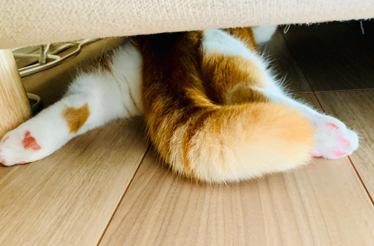 ソファ下にひそむるるちゃん1
