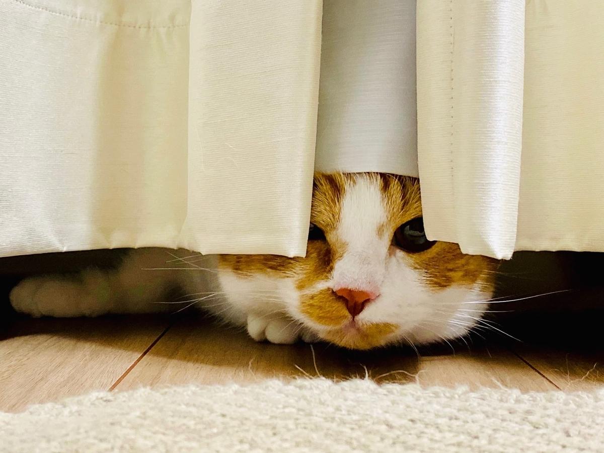 カーテンの中にひそむるるちゃん