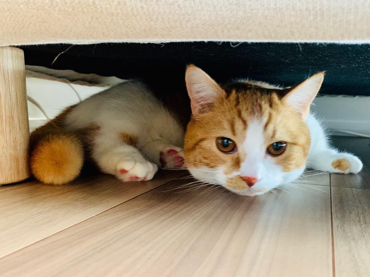 ソファ下にひそむるるちゃん2