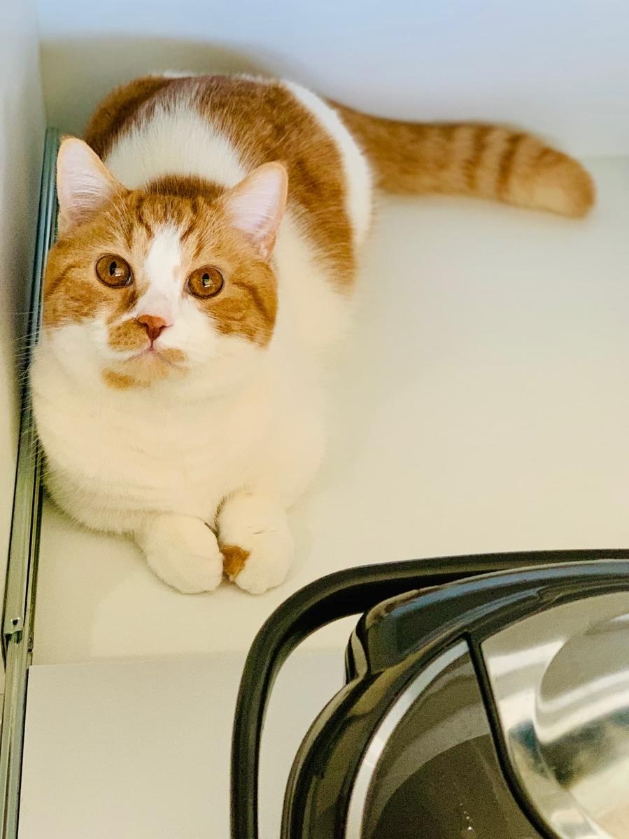 炊飯器を見守るるるちゃん2