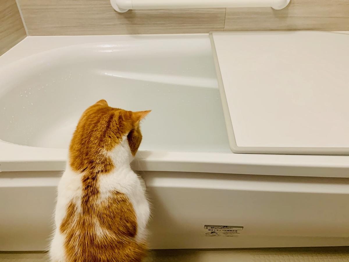 お風呂をのぞくるるちゃん1
