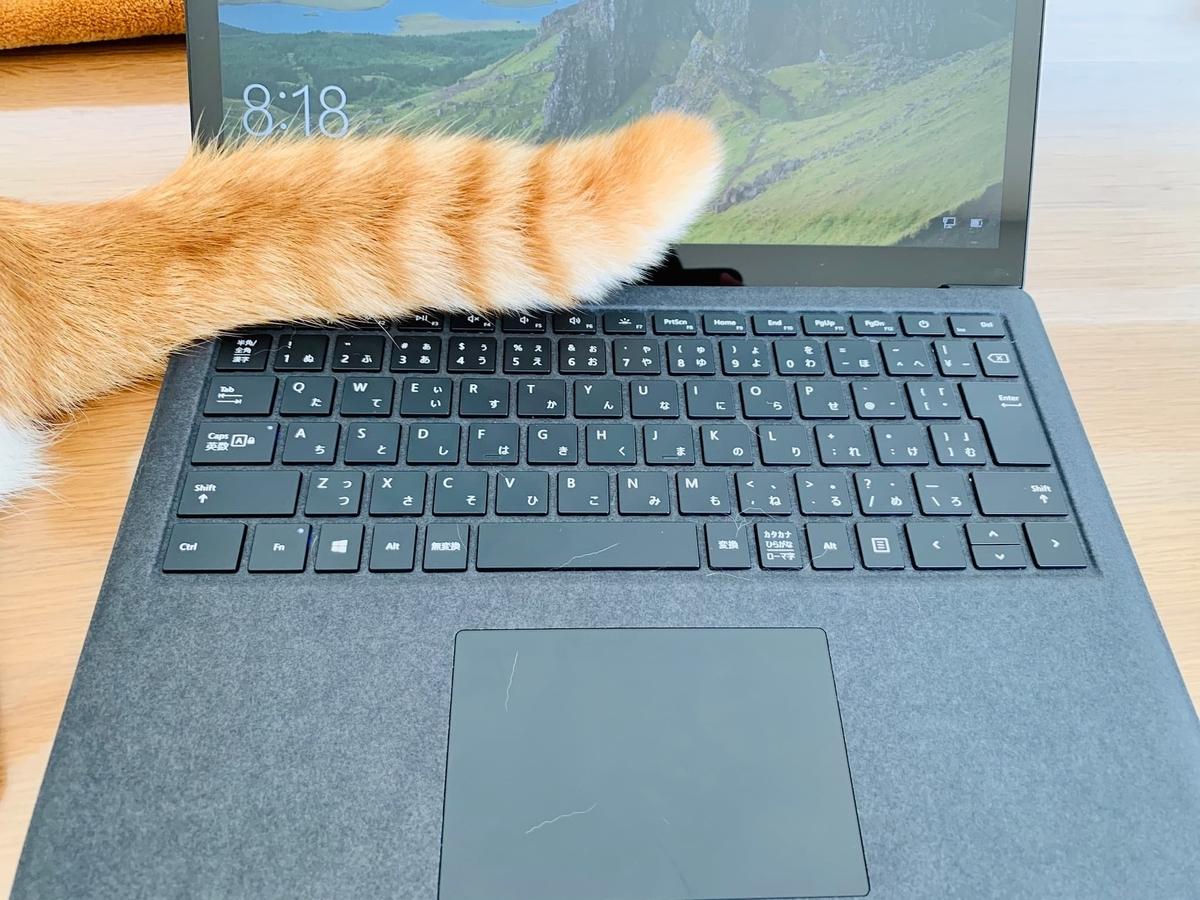 パソコンにしっぽがふわふわするるるちゃん