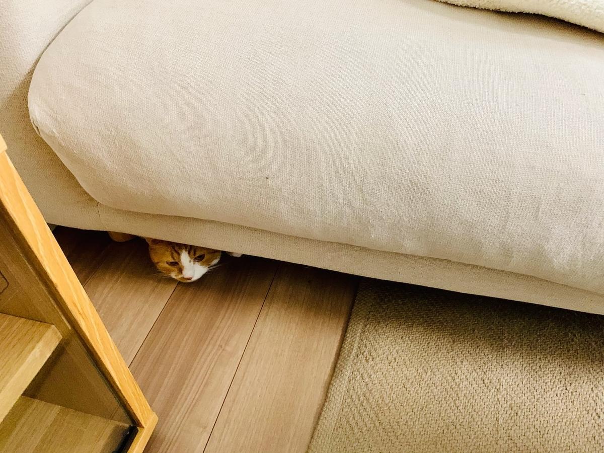 ソファの下からひょっこり出てくるるるちゃん1