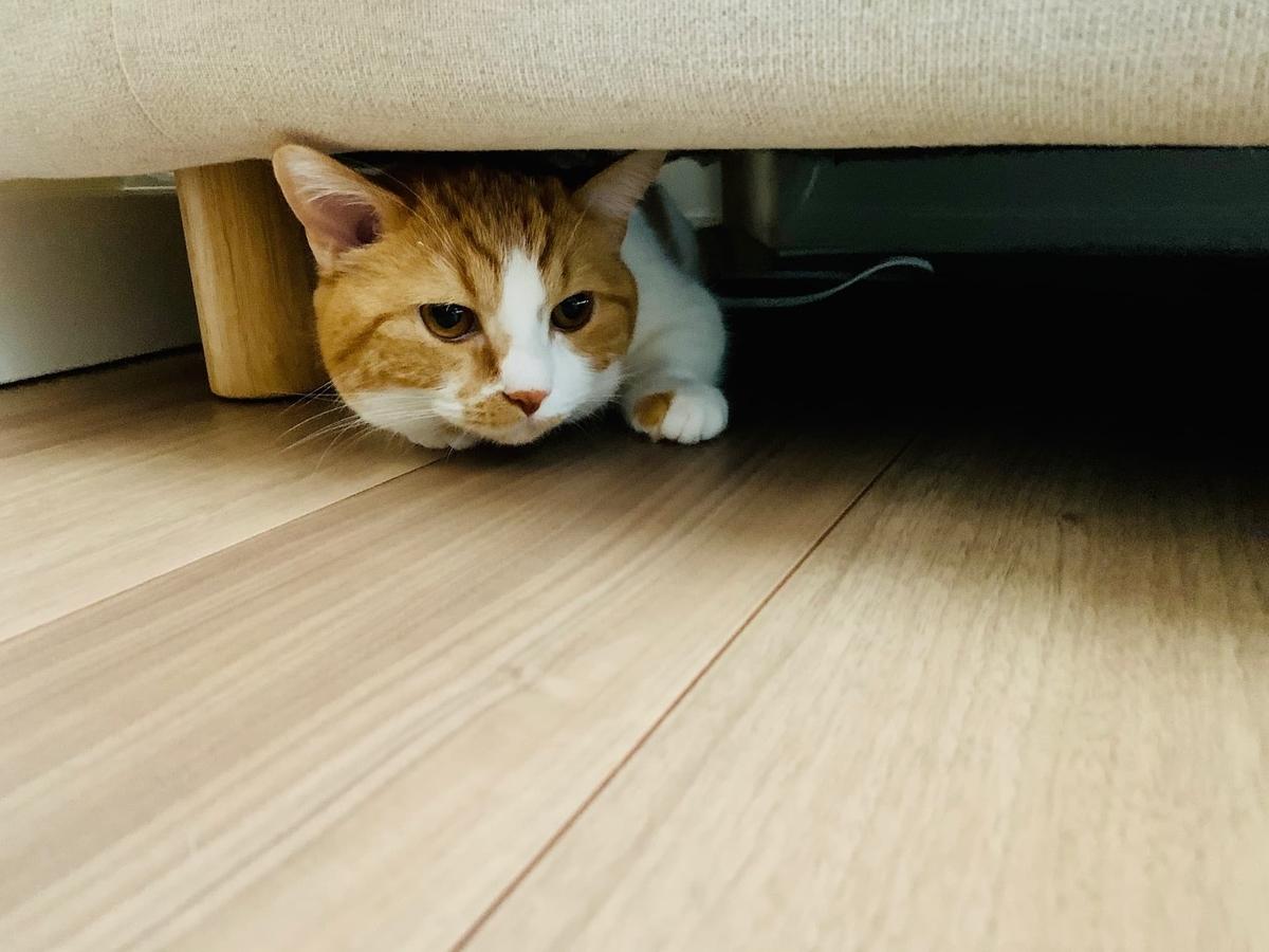 ソファの下からひょっこり出てくるるるちゃん