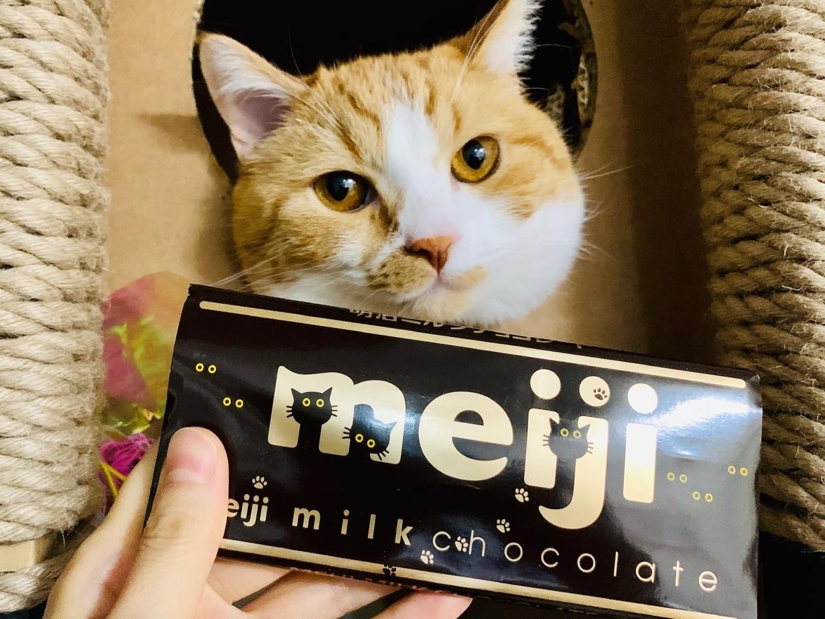 るるちゃんと明治のチョコレート