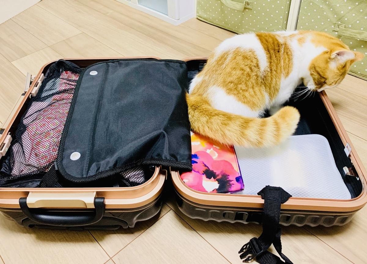 旅行バッグに入り込むるるちゃん