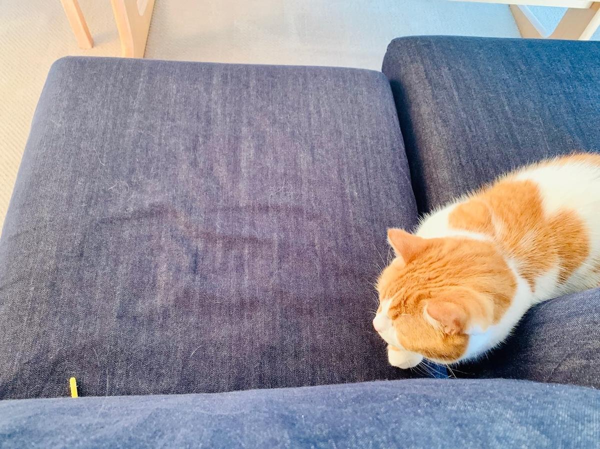ソファの間から出ている猫じゃらしを狙うるるちゃん