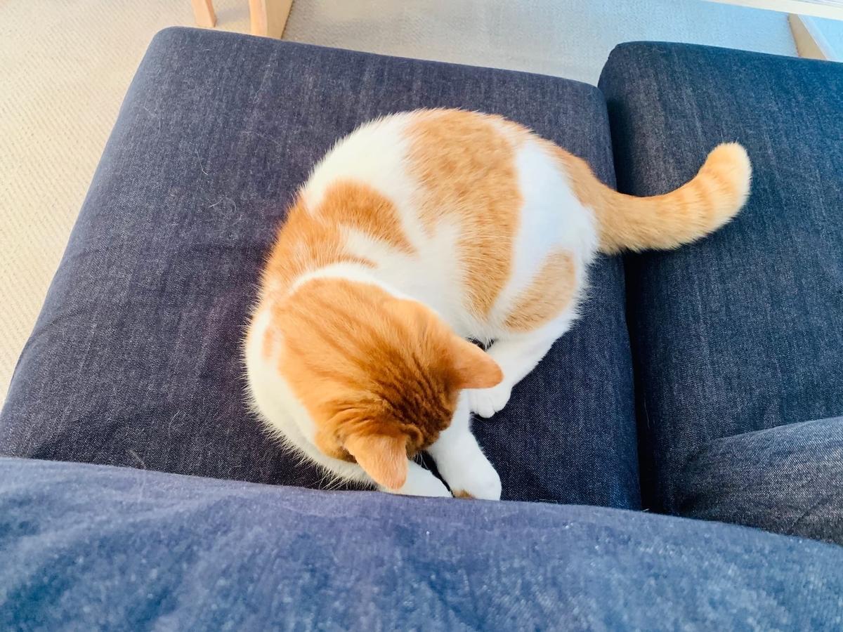 ソファの間の猫じゃらしで遊ぶるるちゃん6