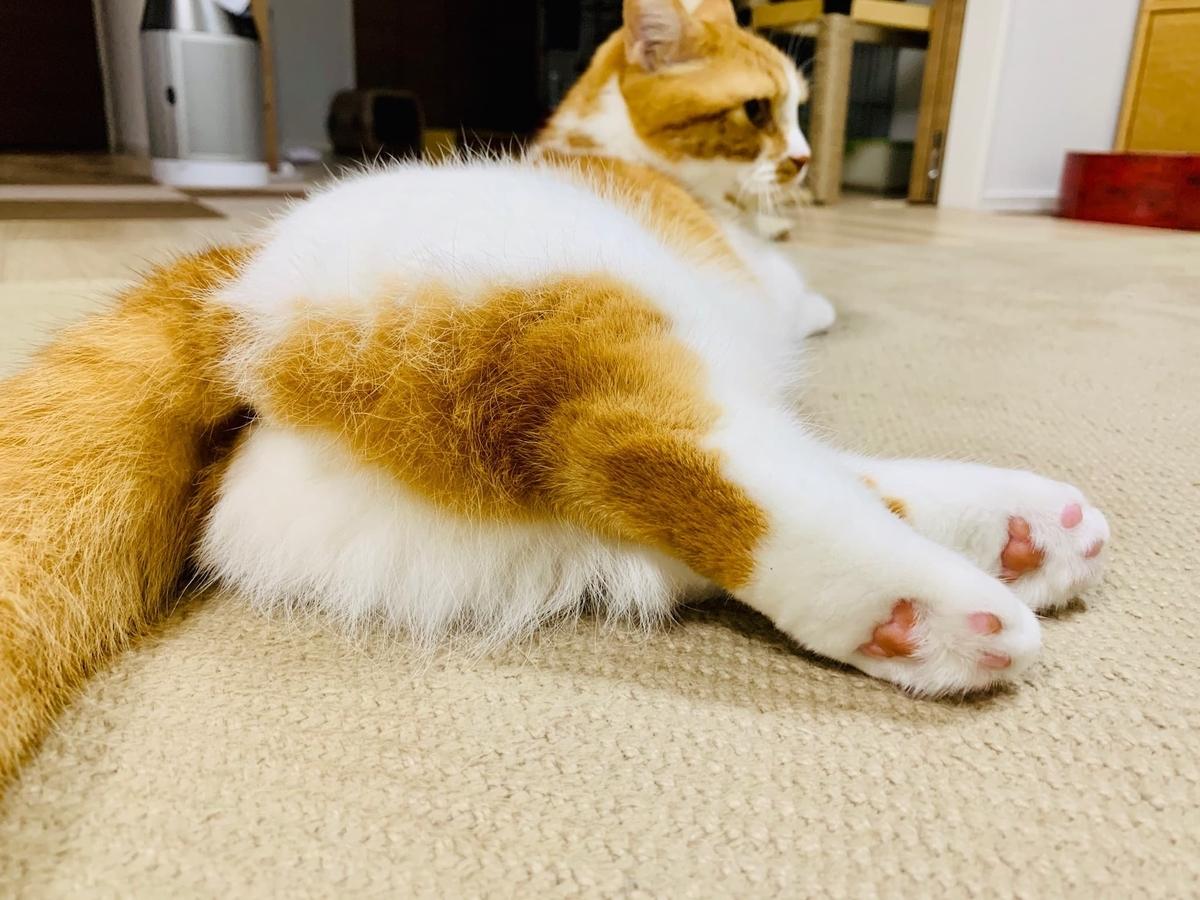 るるちゃんのかわいい短足
