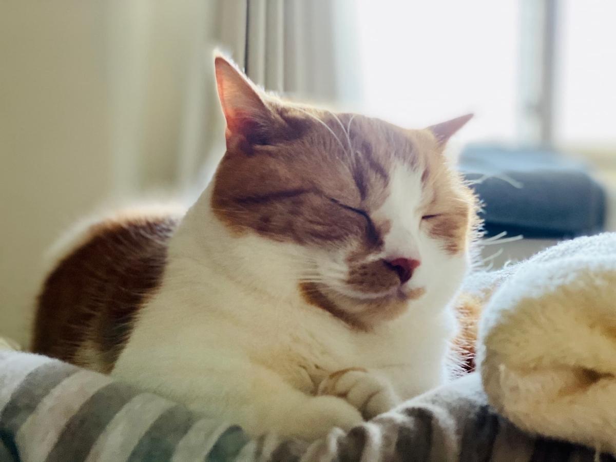 枕の上でお昼寝中のるるちゃん1