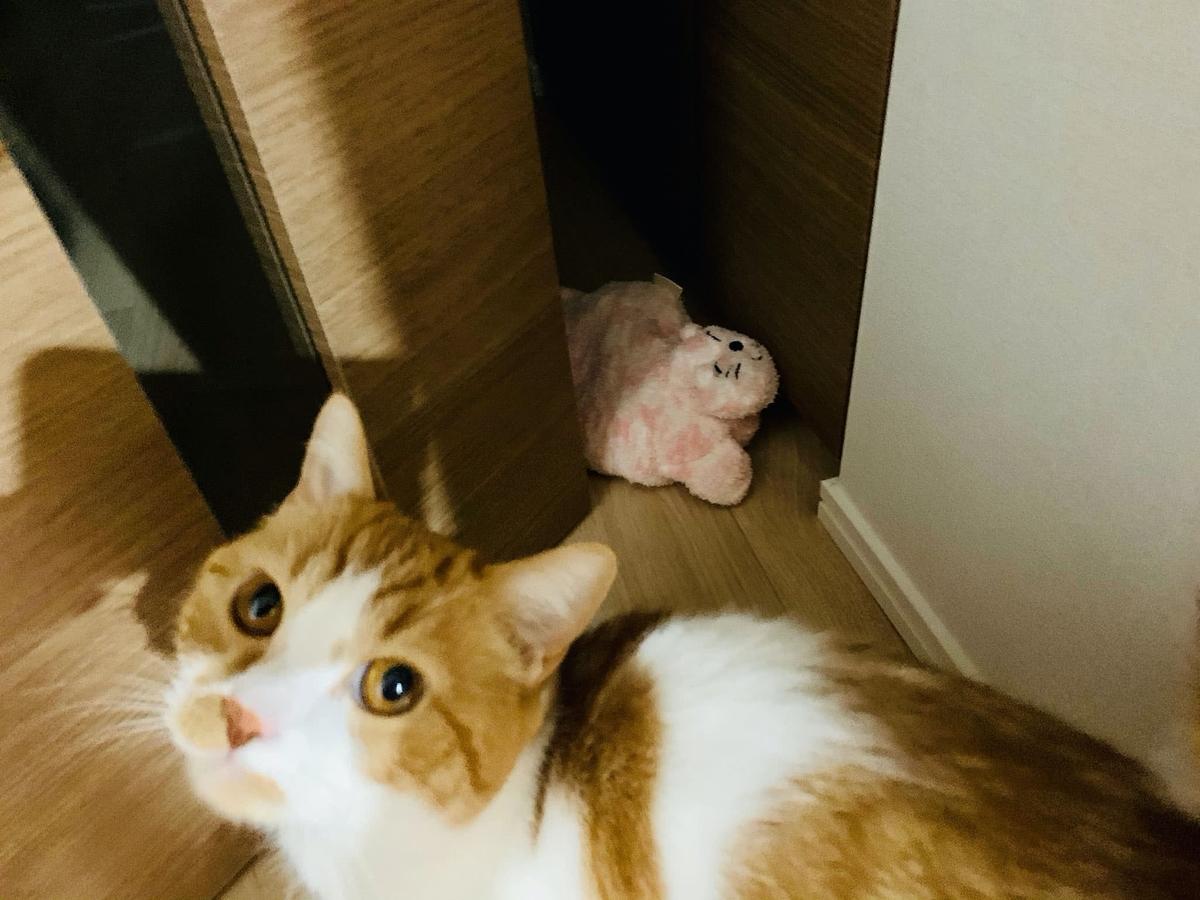 廊下に落ちているピンクの猫さん2