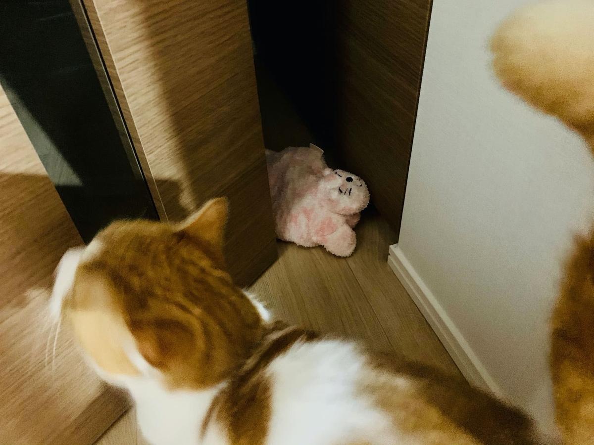 廊下に落ちているピンクの猫さん1