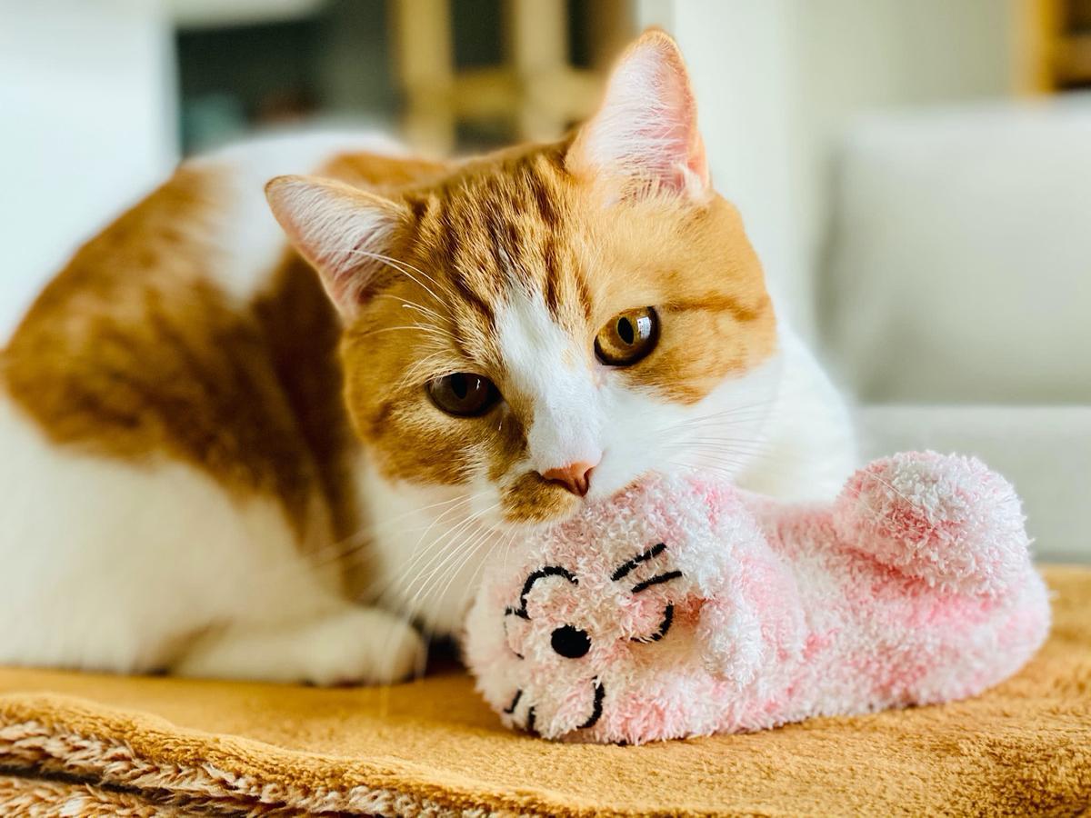 ピンクの猫さんをふみふみするるるちゃん