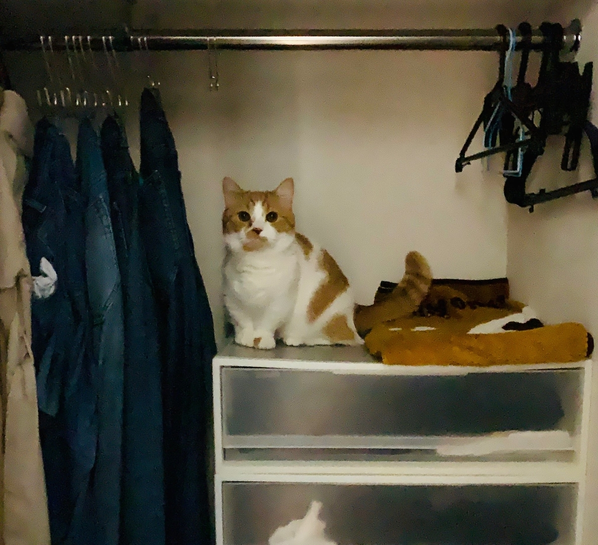 寝室のクローゼットに潜むるるちゃん3