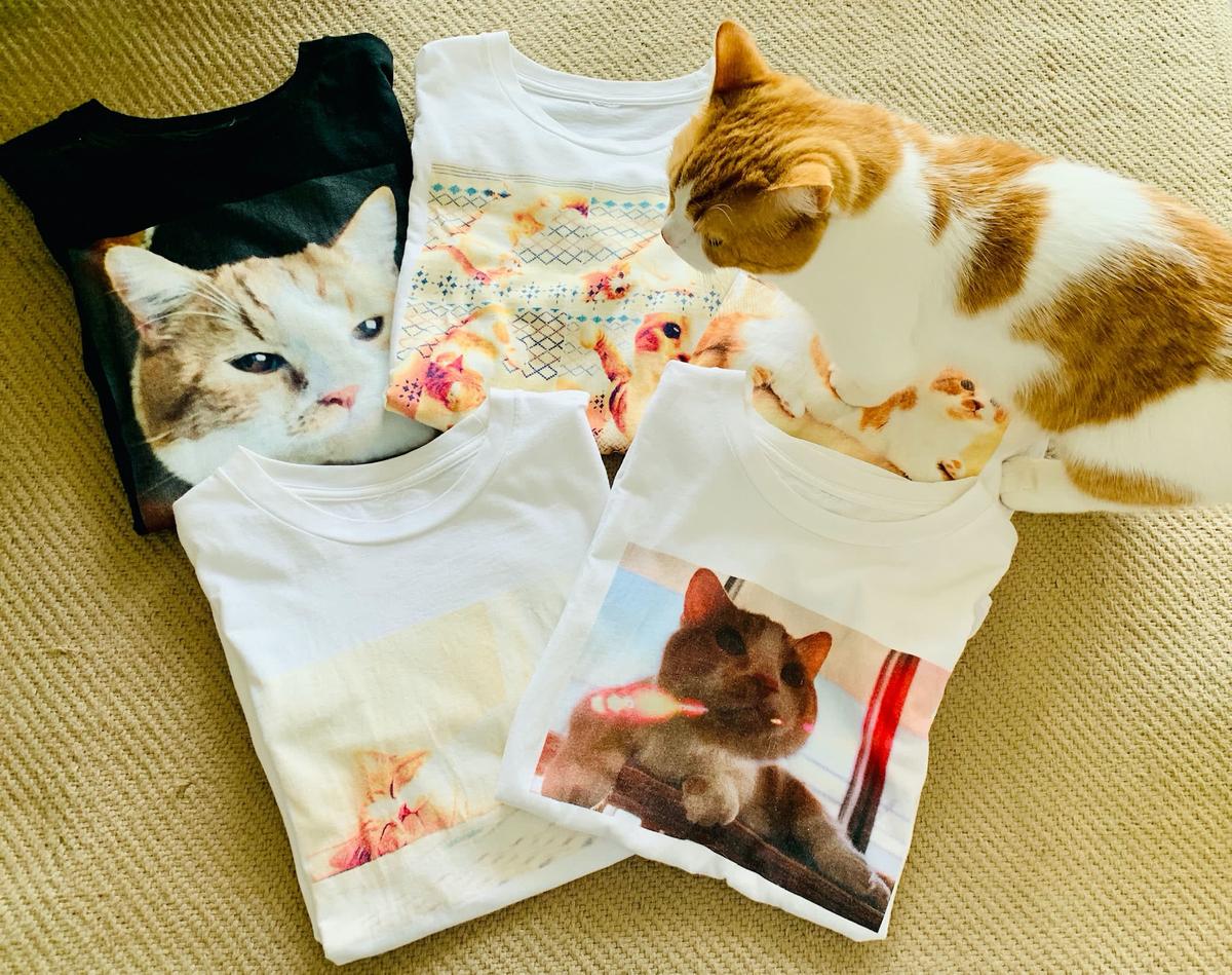 愛猫のTシャツ1