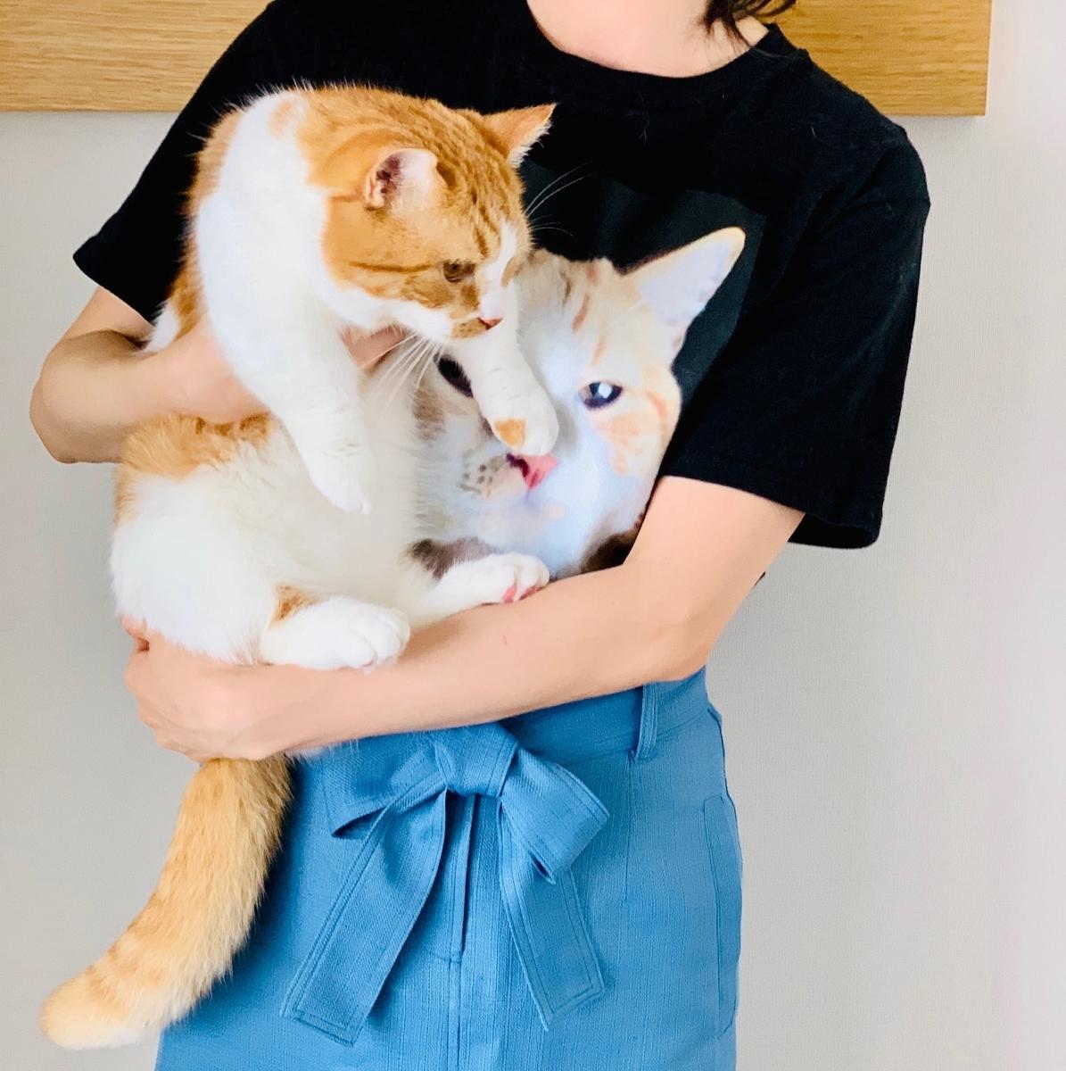 愛猫と、愛猫のTシャツ