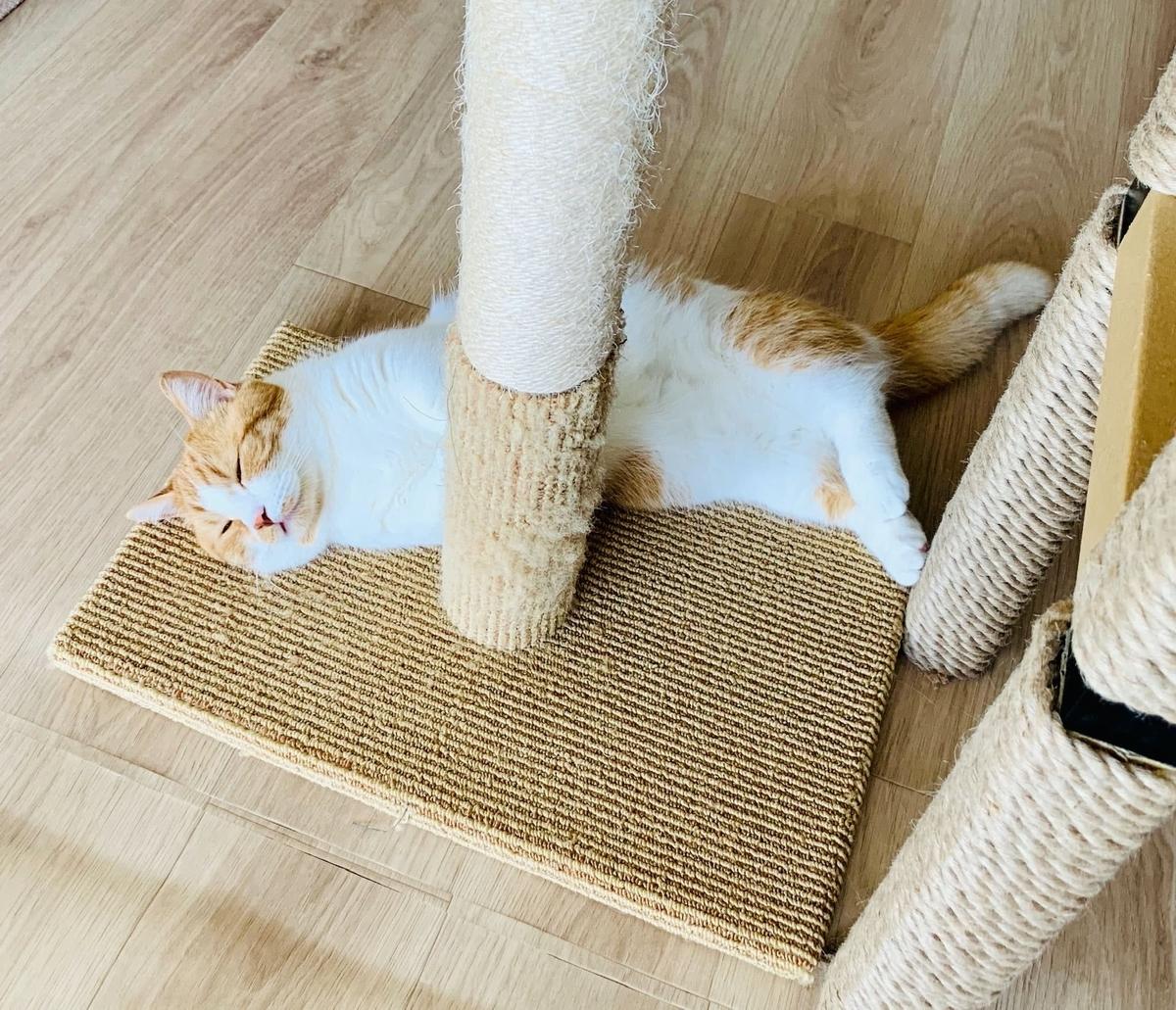 爪とぎタワーでお昼寝するるるちゃん