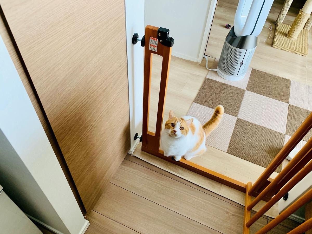 キッチンにやってきたるるちゃん1