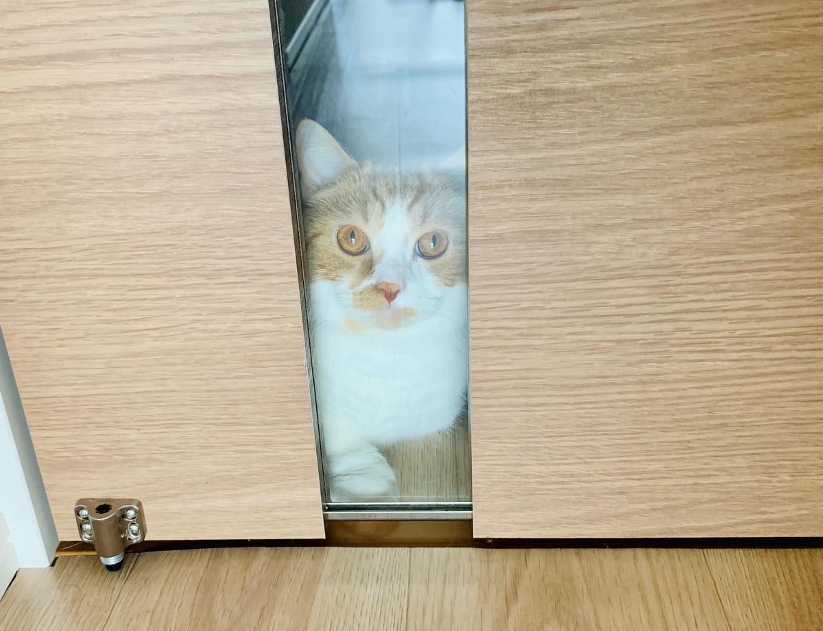 ドアの前で待つるるちゃん2