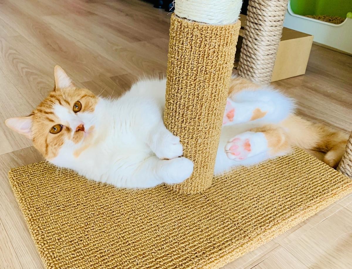 新しいタワーで猫キックするるるちゃん