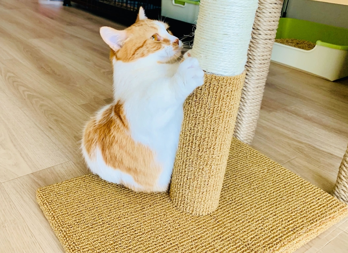 新しいタワーの爪とぎを使うるるちゃん