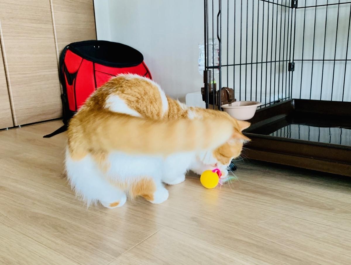 おもちゃを転がするるちゃん2