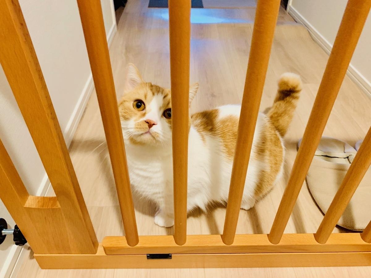 玄関でお見送りをしてくれるるるちゃん