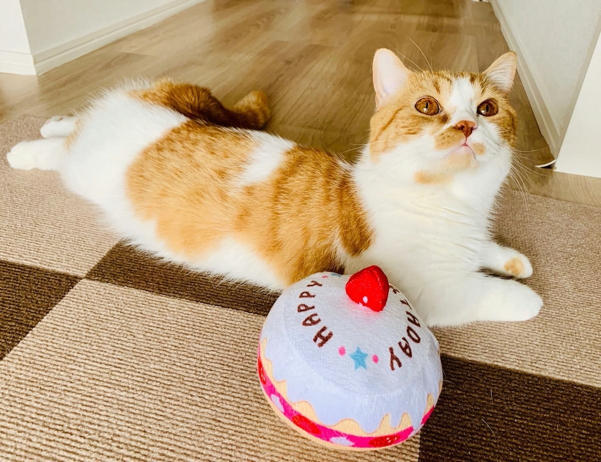 お誕生日ケーキとるるちゃん