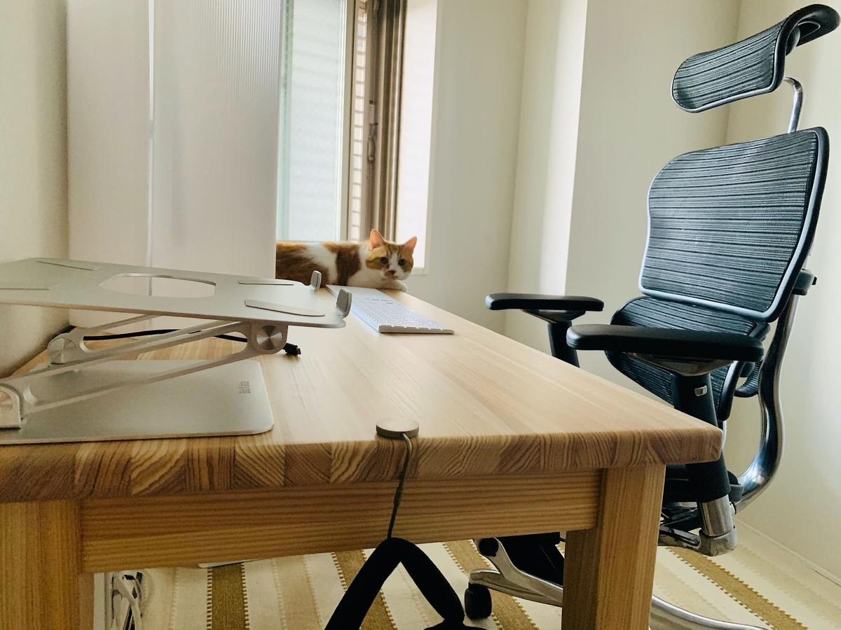 仕事部屋のるるちゃん1