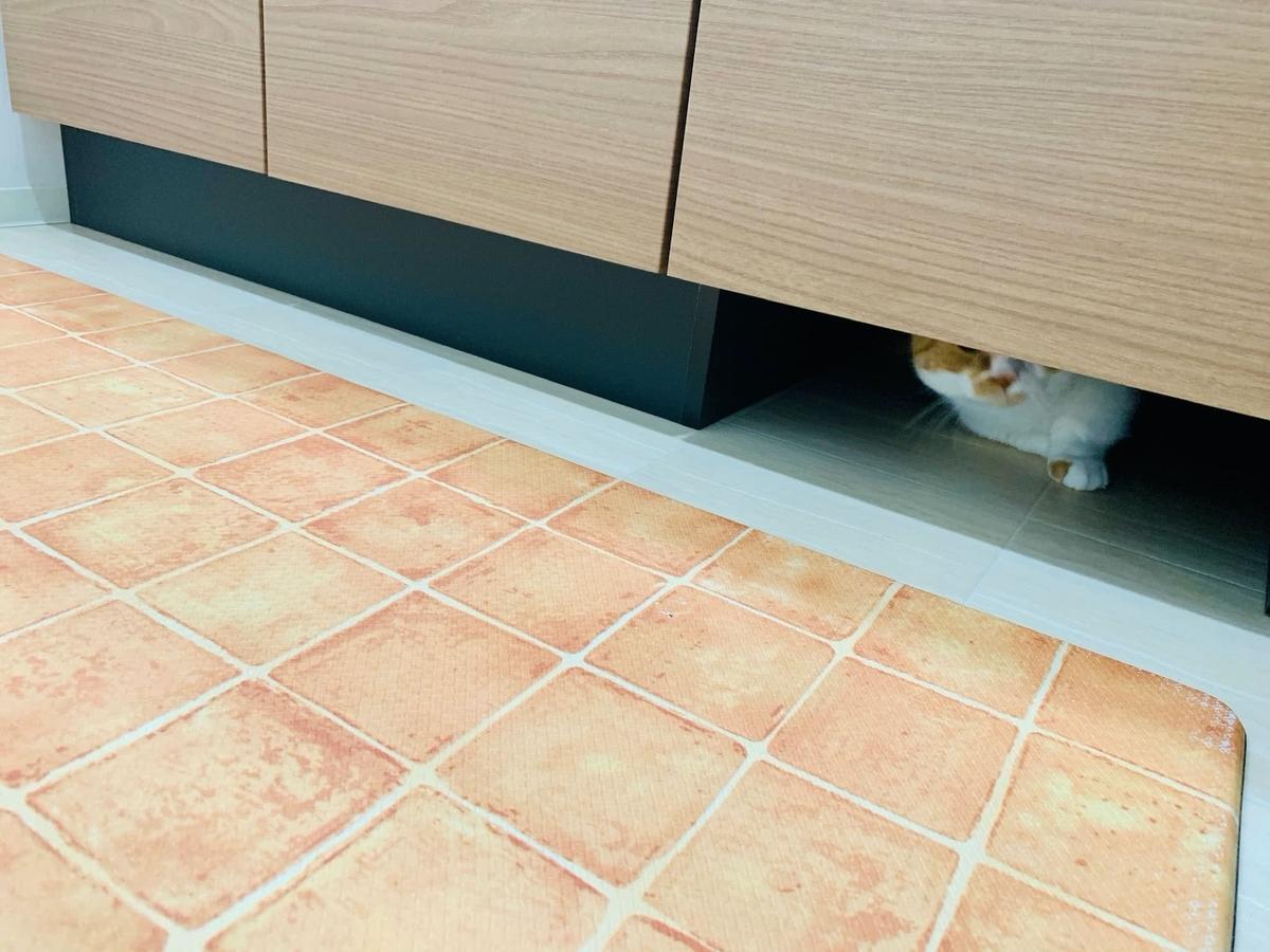 洗面所の下に隠れるるるちゃん1
