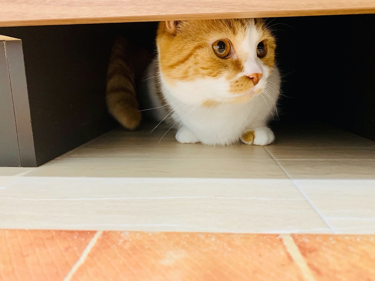 洗面所の下に隠れるるるちゃん3