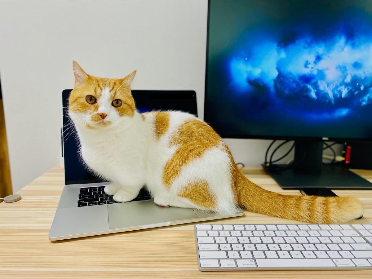 パソコンに乗るるるちゃん2