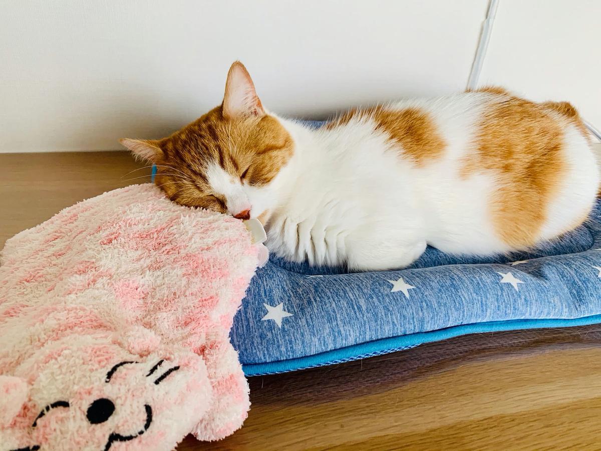 ピンクの猫さんとお昼寝中のるるちゃん