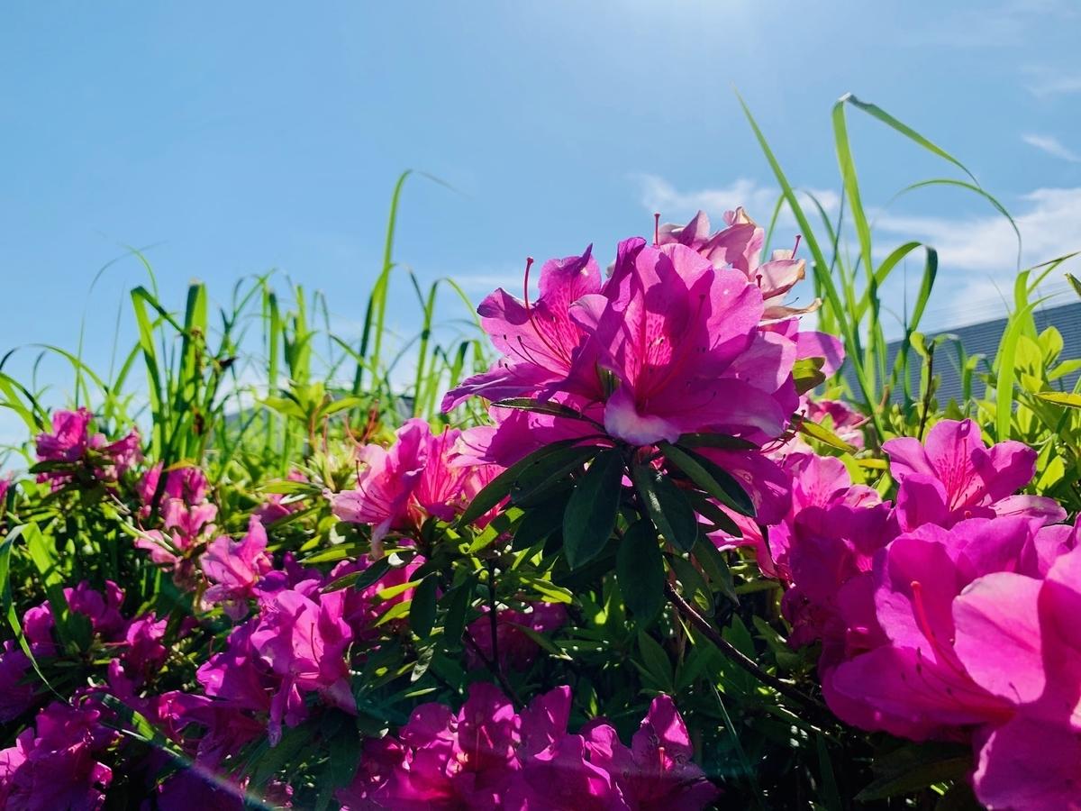 お花の画像