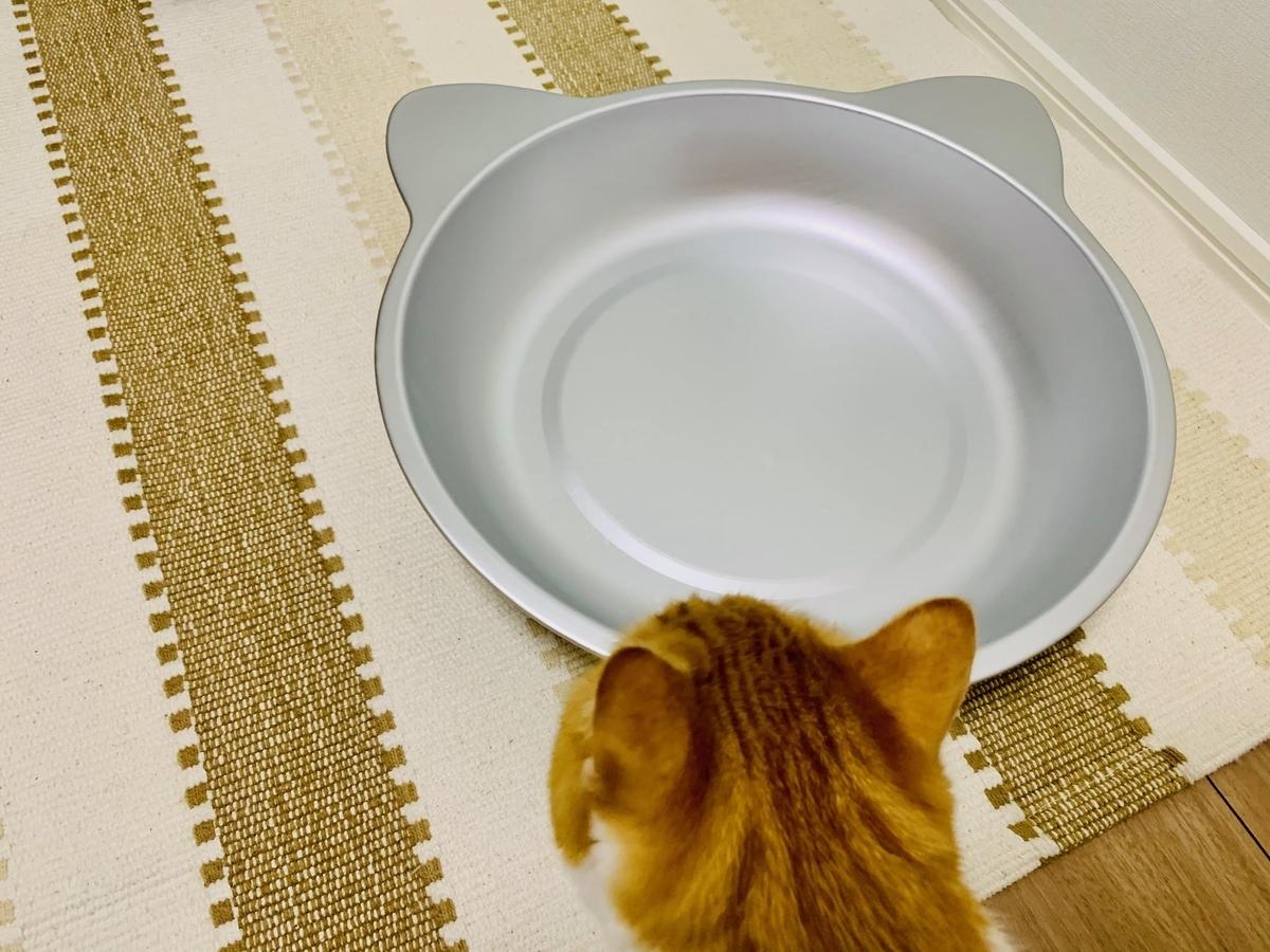 猫鍋に近くるるちゃん
