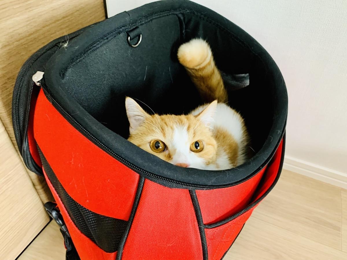 キャリーバッグに隠れるるるちゃん