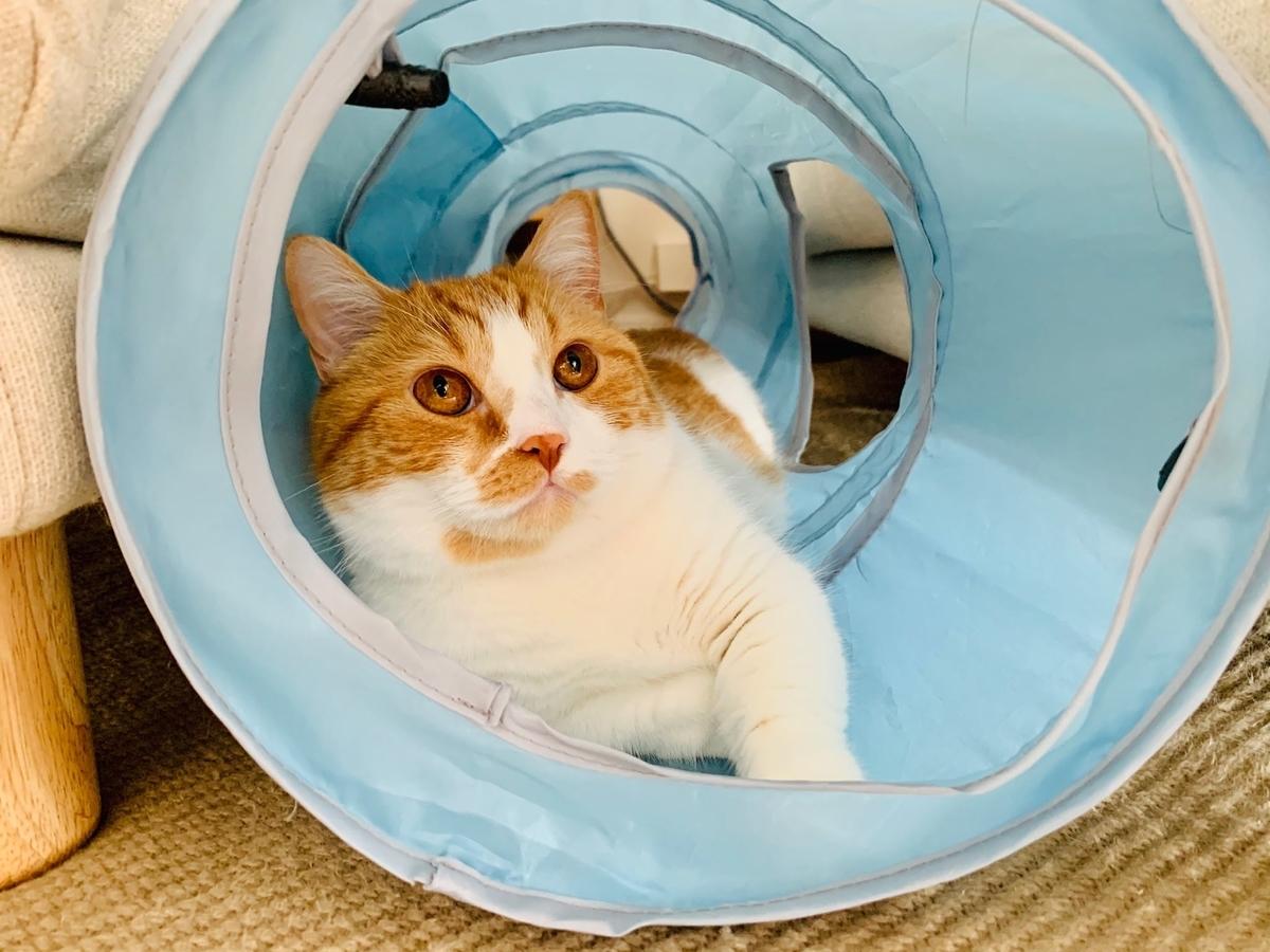 新しいトンネルでリラックスするるるちゃん2