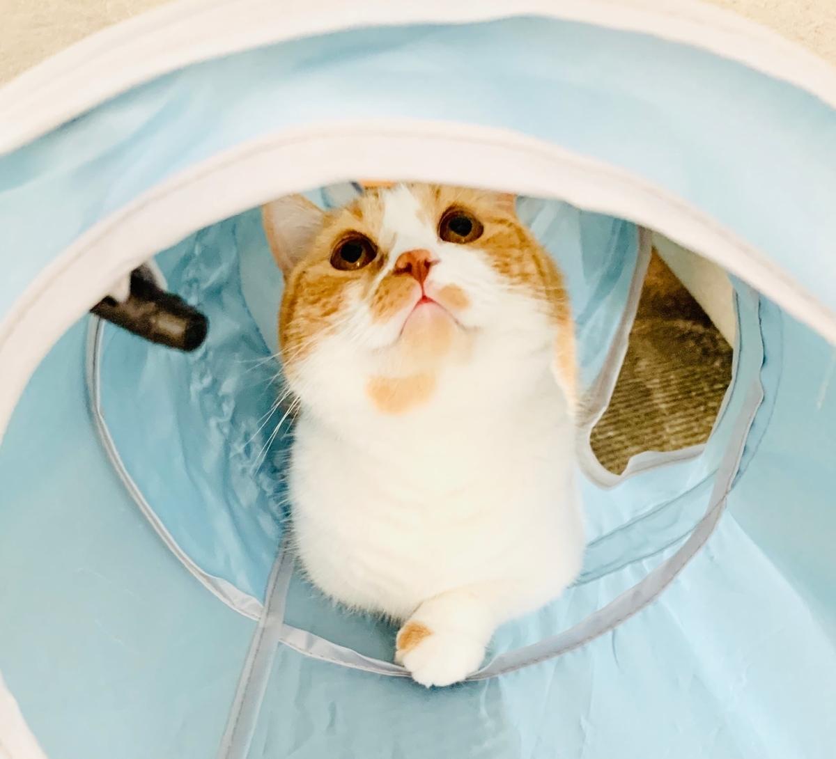 新しいトンネルでリラックスするるるちゃん1