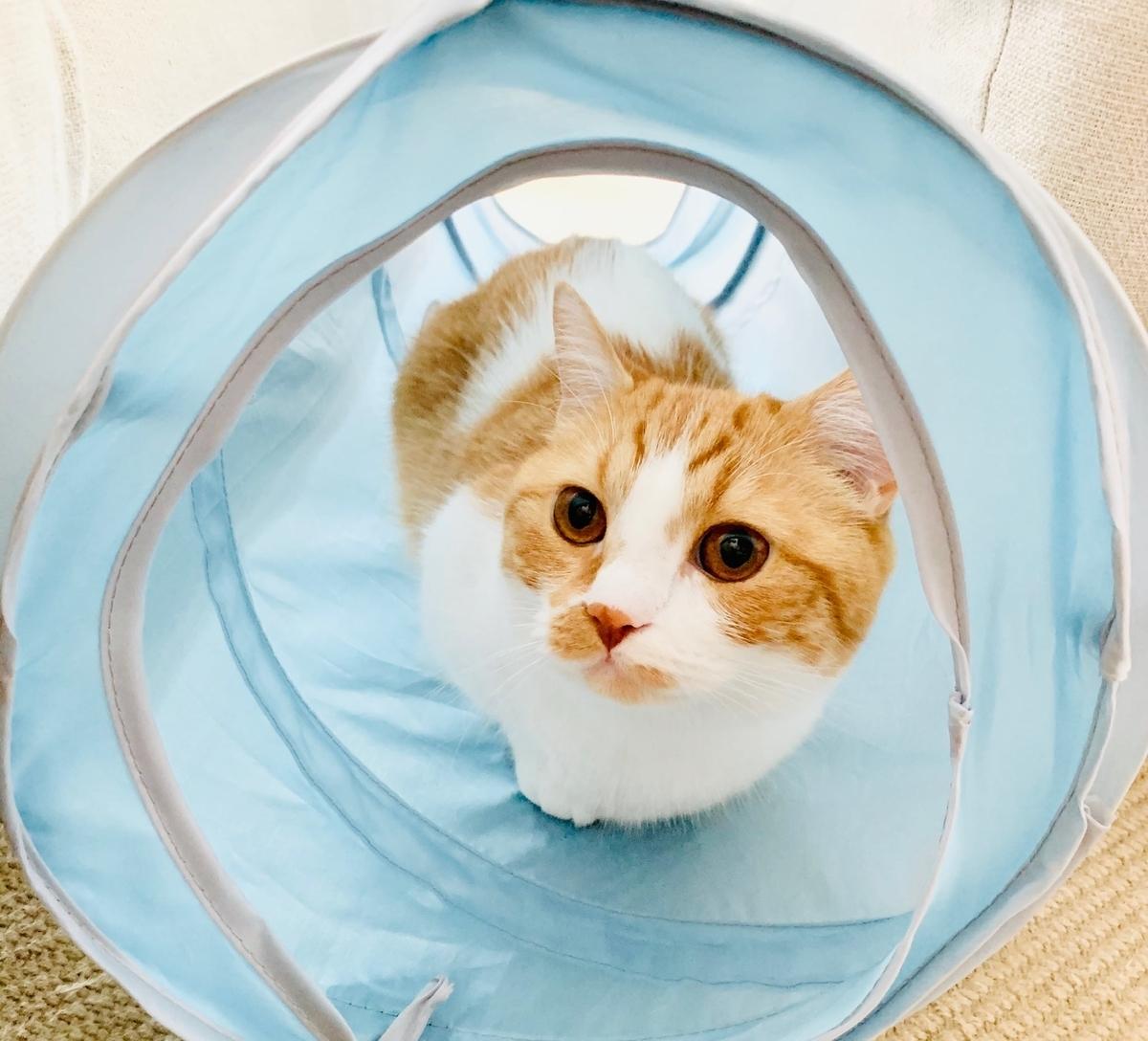 新しいトンネルとるるちゃん3