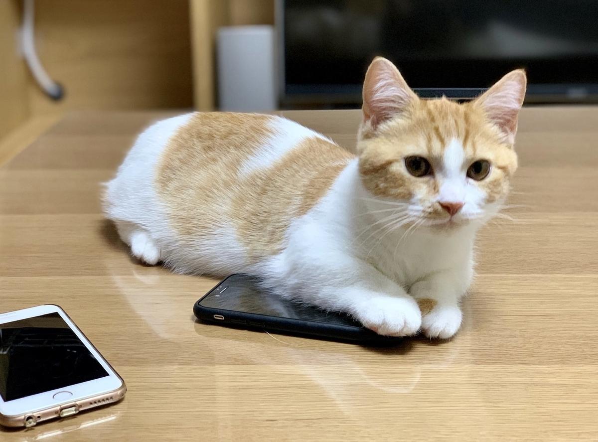 iPhoneとるるちゃん