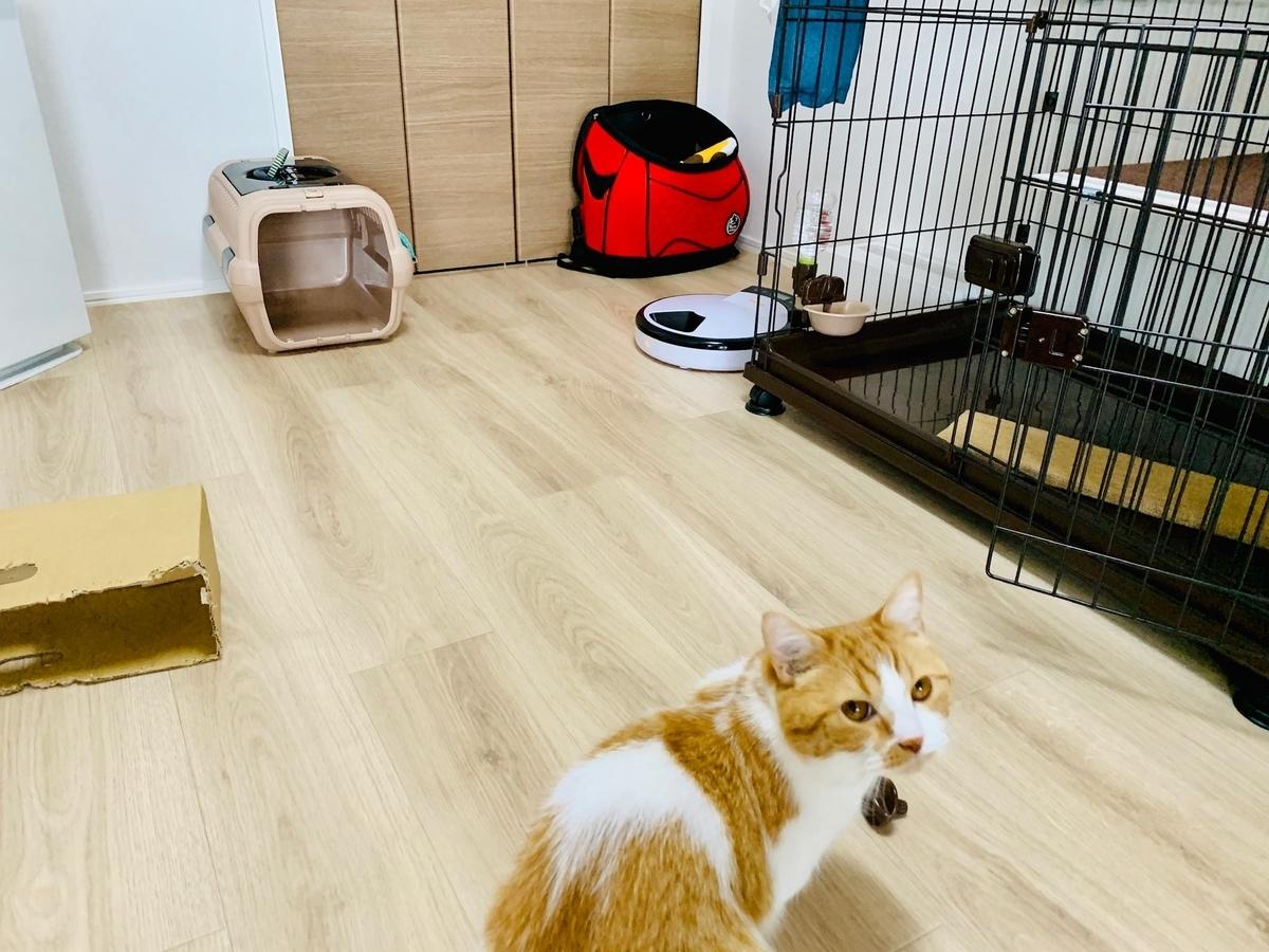 猫部屋のキャリーバッグ