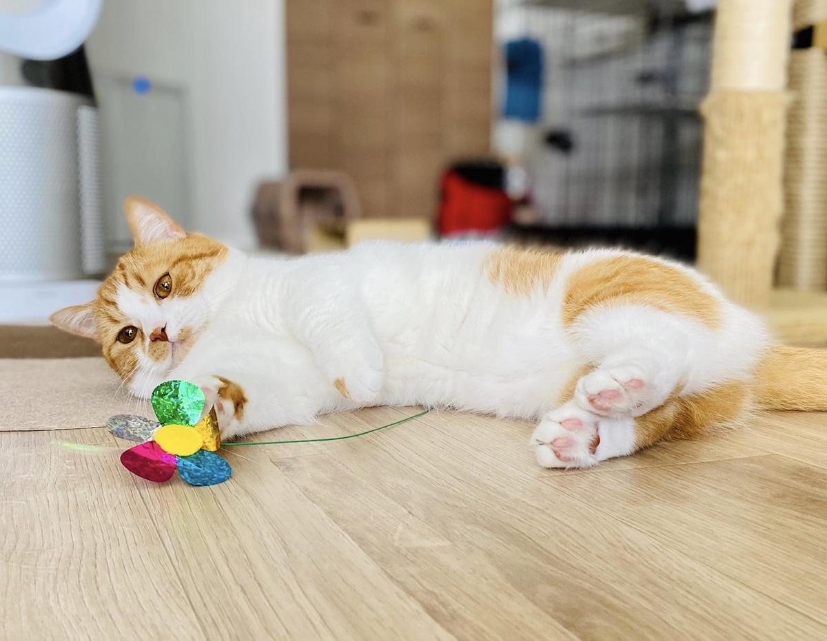 おもちゃで遊ぶるるちゃん