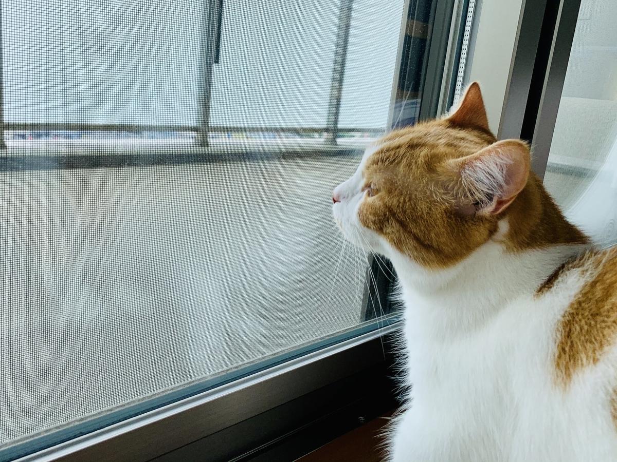 窓の外を眺めるるるちゃん