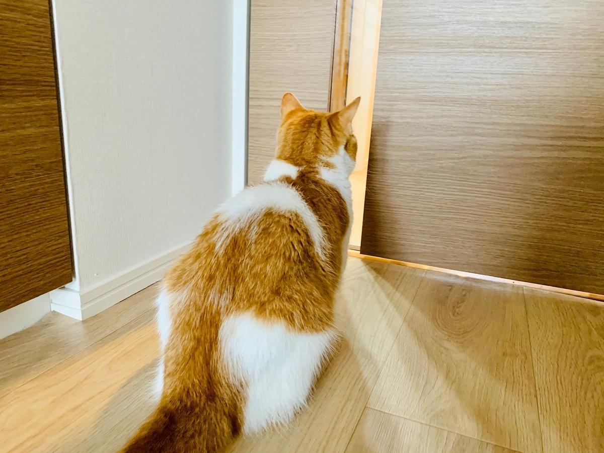 ドアから新しい洗濯機の様子を眺めるるるちゃん2