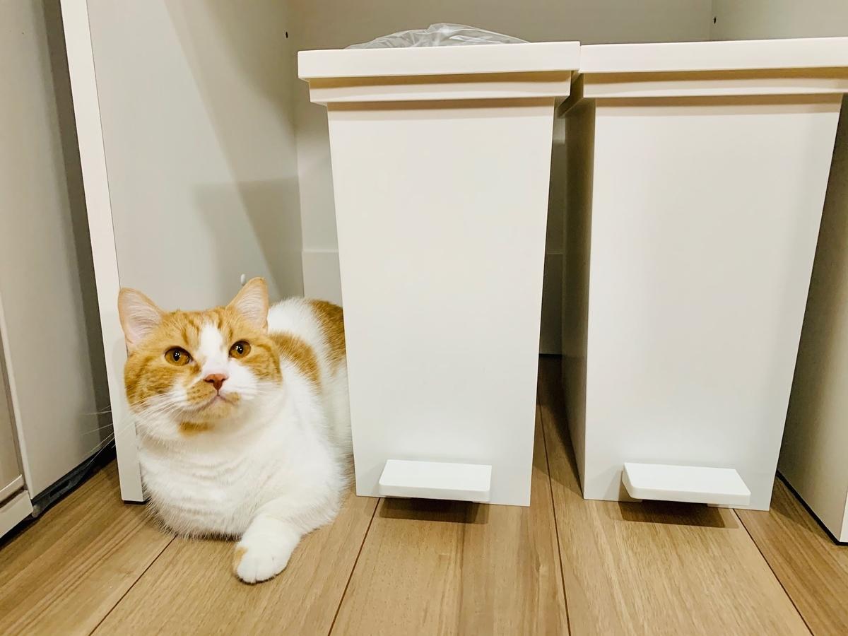 キッチンのゴミ箱とるるちゃん