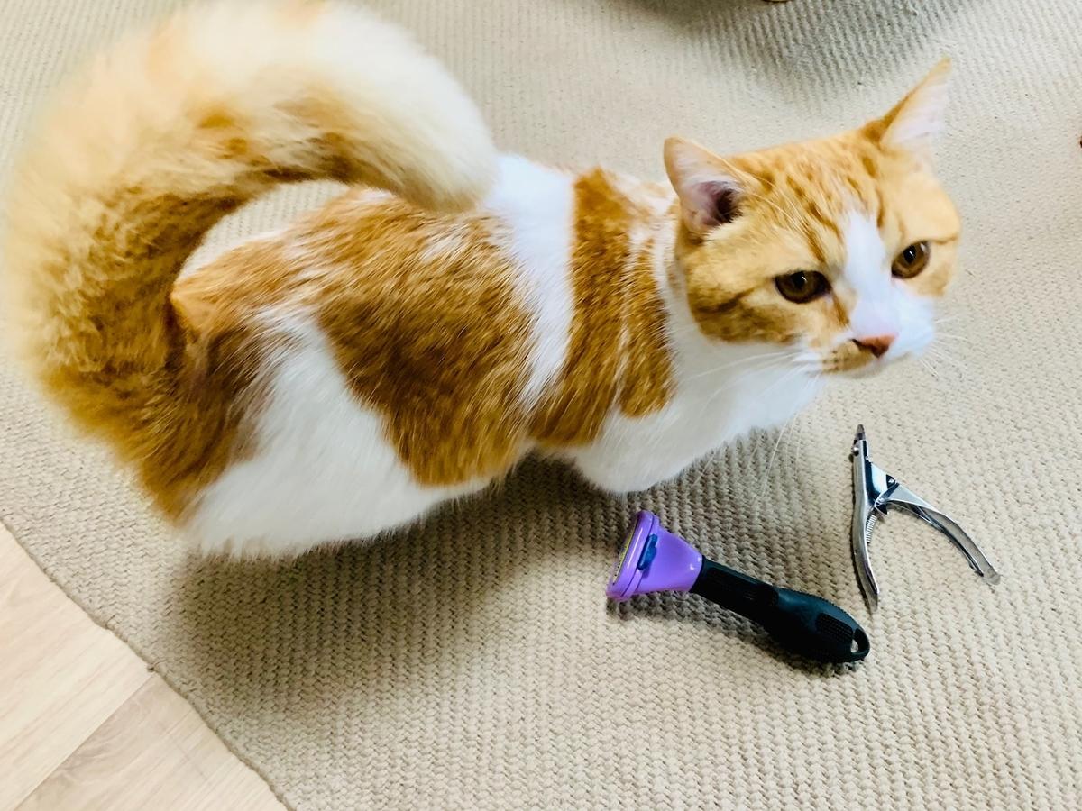 ギロチンタイプの爪切りとファーミネーター