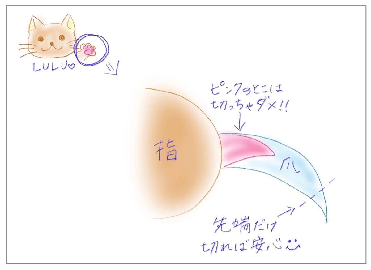 猫の爪のクイックの説明
