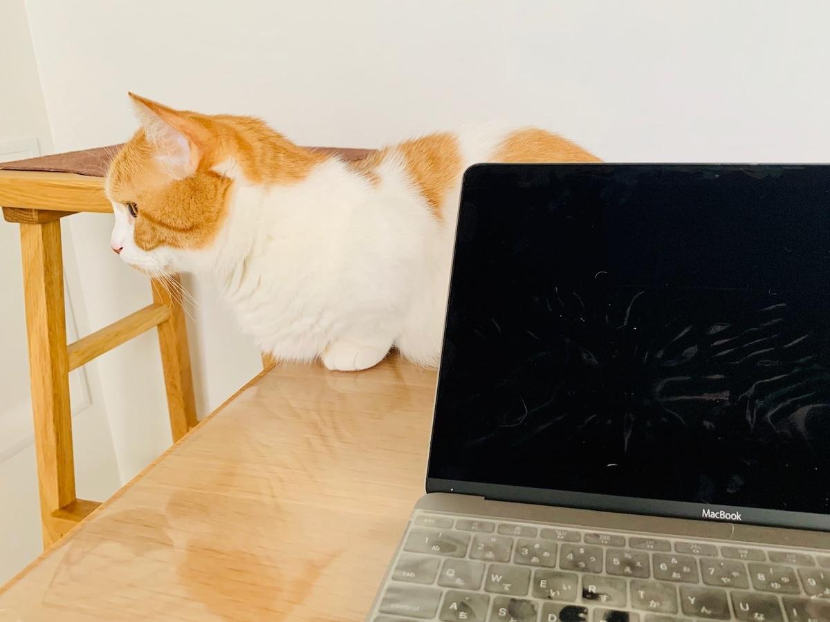 パソコンの前にいるるるちゃん